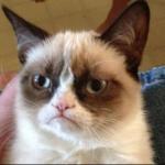 گربه بلا