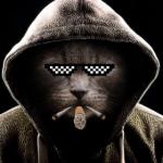 Mr. Puss In Hoods