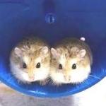hamstershop
