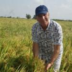 ricedryplanting