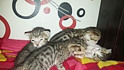 بامزه ترین بچه گربه های دنیا!