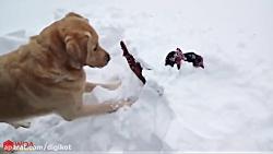 سگ قهرمان حیوانات دیگر ...
