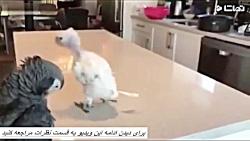 کلیپ خنده دار حیوانات 72...