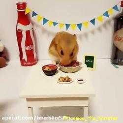 تهیه غذا برای همستر http:/...