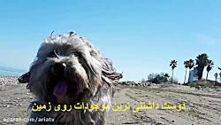 سگ ها بهترین دوست انسان...