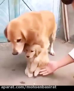 عاطفه ی مادری در حیوانا...