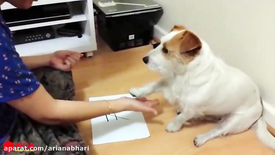 سگ های باهوش و ریاضیدان