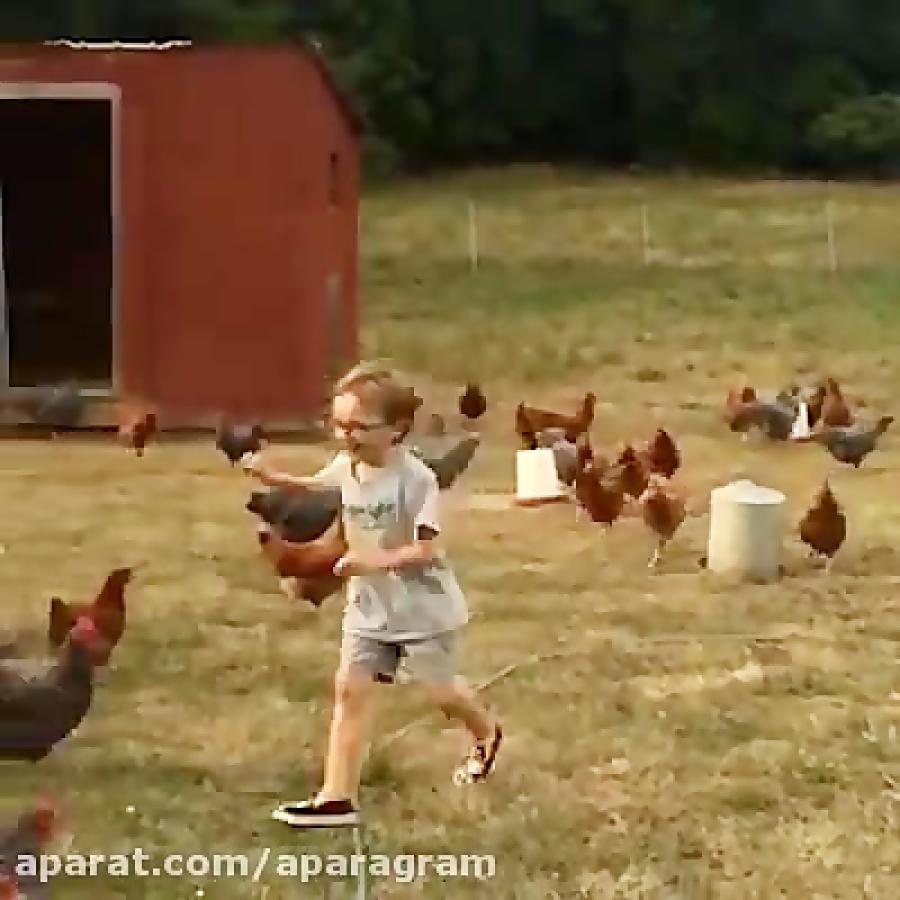 یورش مرغ و خروس های خشمگین