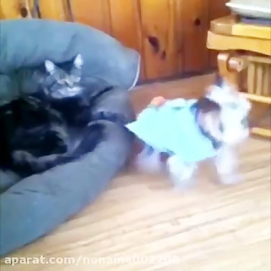 گربه ها و سگ های جالب و خنده دار