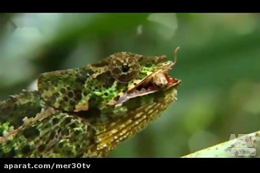 حیوانات عجیب ماداگاسکار