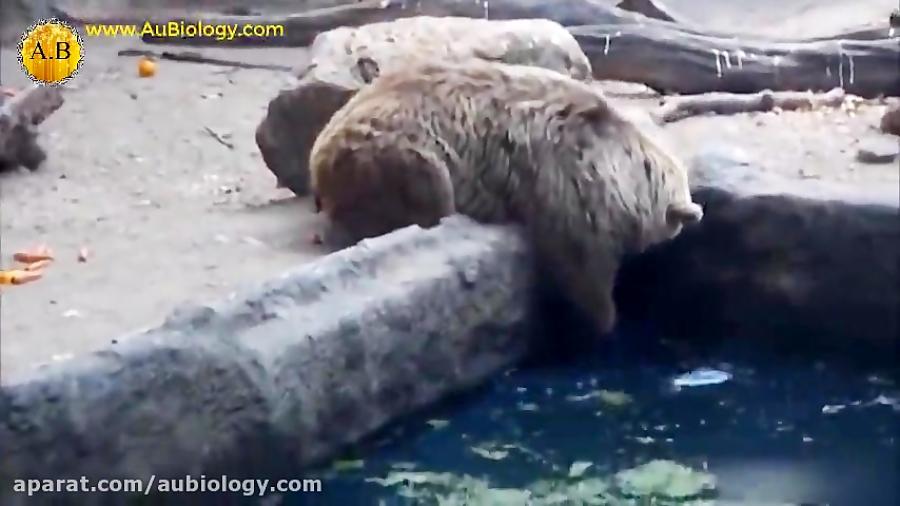 احساسات حیوانات (2) - رفتار شناسی