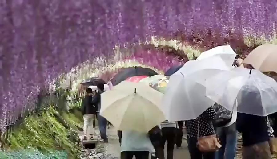 طبیعت زیبا و تونل گل های رنگی