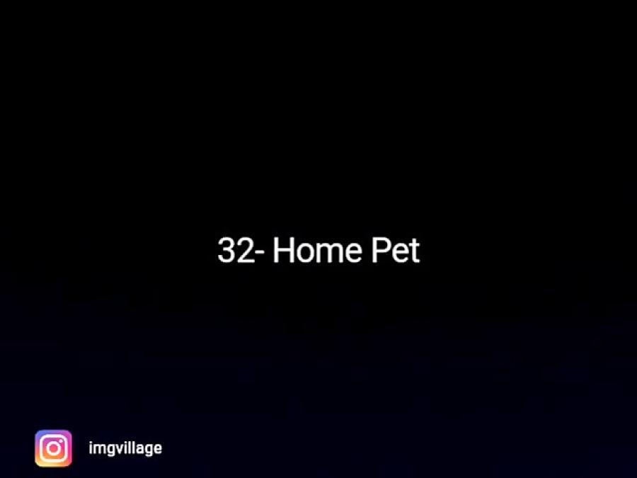 32- حیوان خانگی
