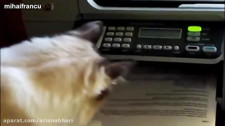 واکنش بسیار خنده دار  گربه ها به پرینتر