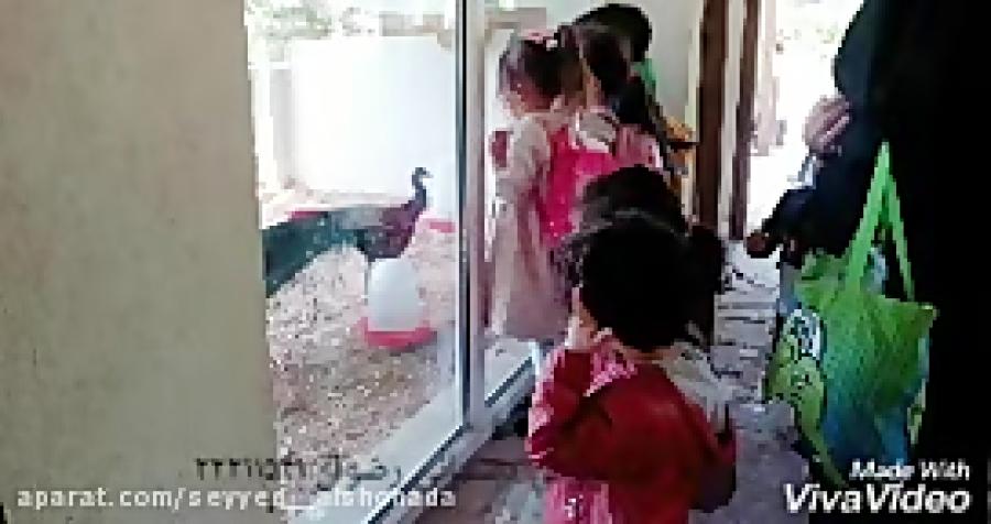 اردوی باغ پرندگان کودکان مهد و پیش دبستان رضوان