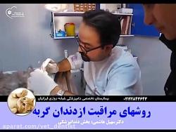 مراقبت های بهداشتی دندان گربه ها-۱