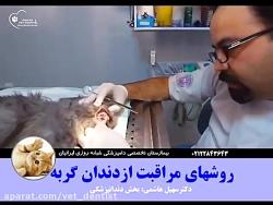 مراقبت های بهداشتی دندان گربه ها-۲