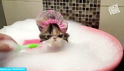 حمام کردن حیوانات/کلیپ ...