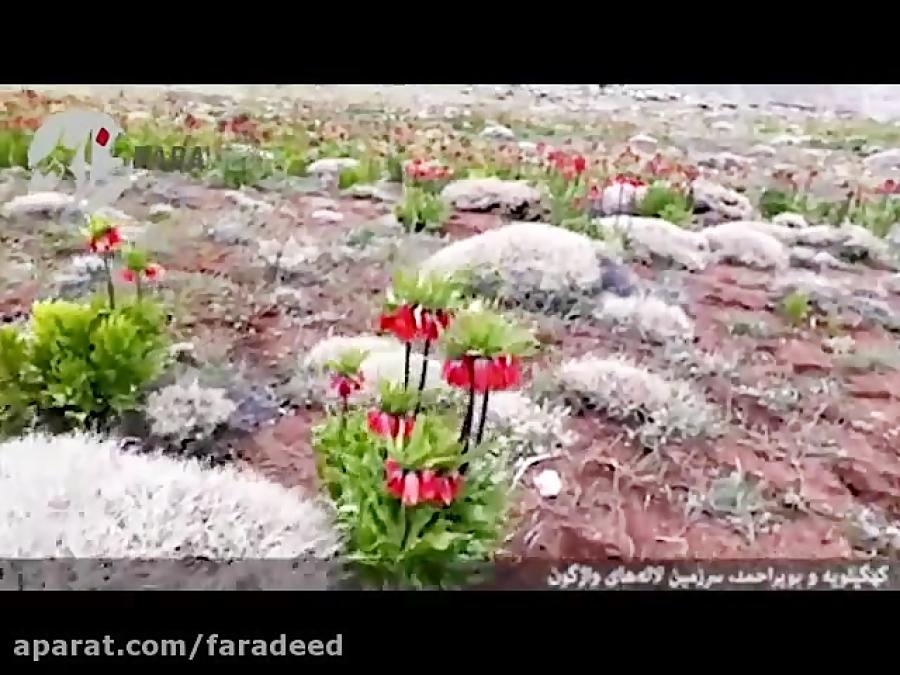سرزمین لاله های واژگون