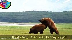 نبرد دیدنی حیوانات