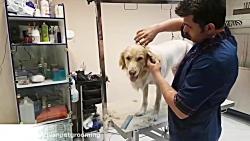 آرایشگاه تخصصی حیوانات...