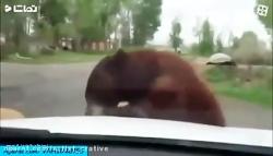 وحشتناک ترین حملات حیو...