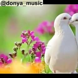 ترانه خیلی خوشگل مذهبی ...
