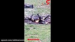 عکس عجیب از جسد سوخته ا...