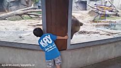 بچه های بامزه و حیوانات...