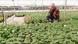 برای پرورش دهنده گل و گ...