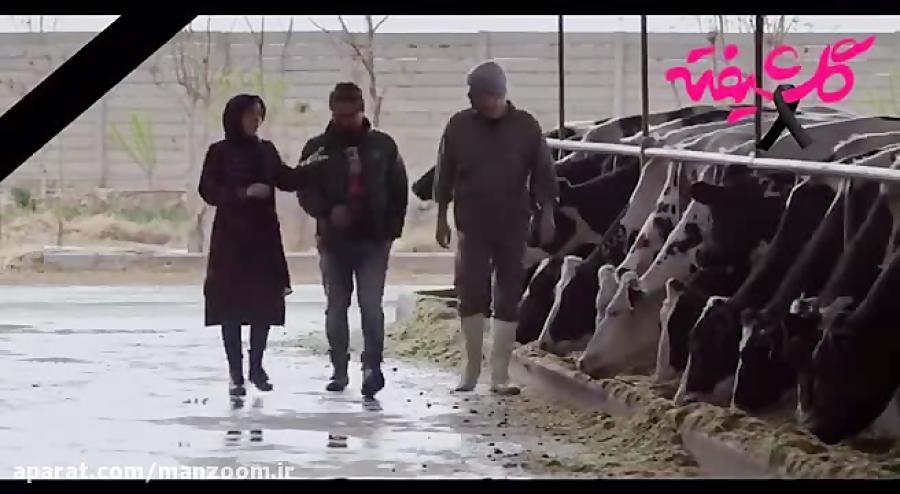 تیزر قسمت جدید سریال گلشیفته