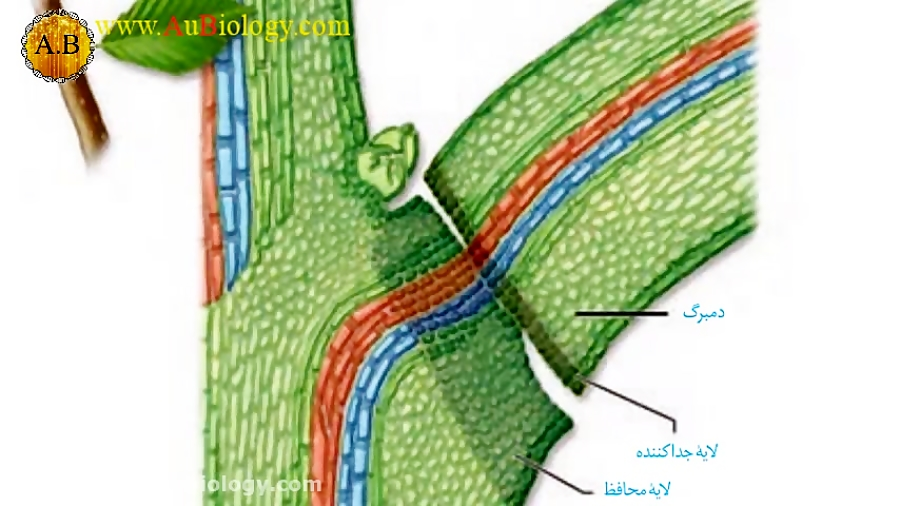 بازدارنده-های-رشد-آبسیزیک-اسید-و-اتیلن-تدریس