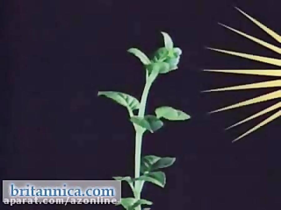 آزمایش-پاسخ-گیاه-به-نور