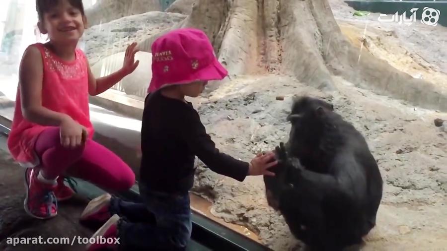فانی بچه ها و میمون ها