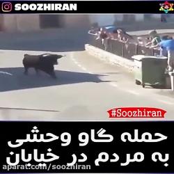 حمله گاو وحشی به مردم در خیابان