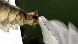 شجاعت عجیب گربه 5 ؛ در ب...