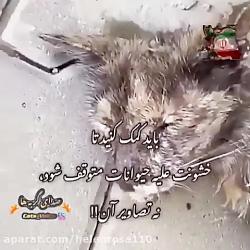 كمك كنید تا خشونت علیه حیوانات متوقف شود!!