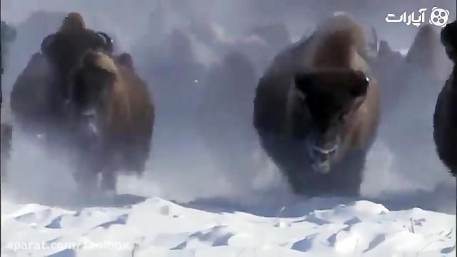تصاویری باورنکردی از قطب شمال و جنوب