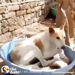 کمک به حیوانات