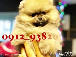 sale and import animals  فروش و وا...