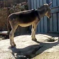 فهمیده ترین خر دنیا.کی ...