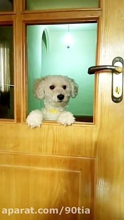 میلو سگ خوشکل خونه ما ـ ...