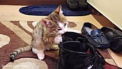 kitty - حیوانات خانگی - گرب...