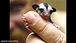 کوچکترین حیوانات در جه...