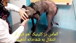 با حیوانات مهربان باشی...