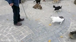 حیوانات را دریابیم.
