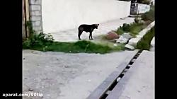 پانسیون حیوانات خانگی