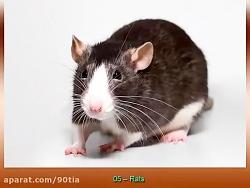 10 حیوانات باهوش ترین بر...