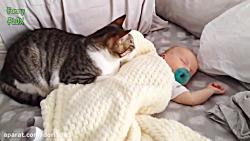 گربه ها با بچه های بامزه!(پارت1)