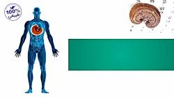 خواص دارویی و درمانی قارچ گانودرما لوسیدوم
